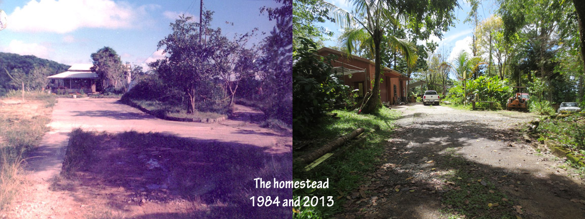 1984-and-2013-homestead