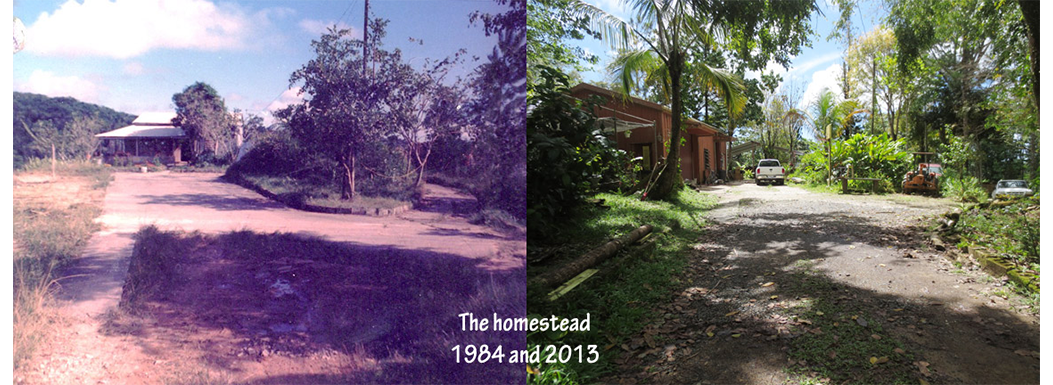 Then 1984 & Now 2013