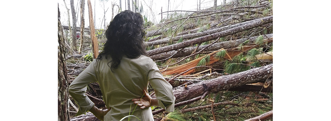 HELP US rescue the wood from fallen trees after Hurricane Maria