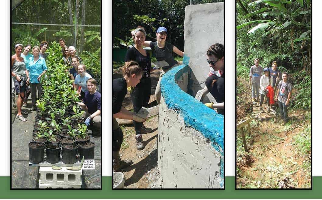 Volunteer at Las Casas de la Selva, 2021